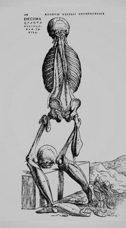 Humani